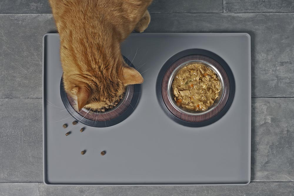 Benefits of Adding Wet Food to Your Cat's Diet