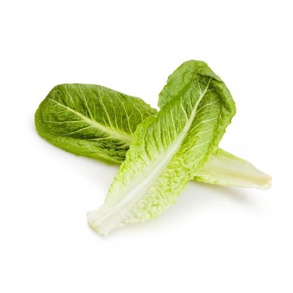 Romaine Lettuce Extra 1 Pc 109641-V001 by Spinneys Fresh Produce Market