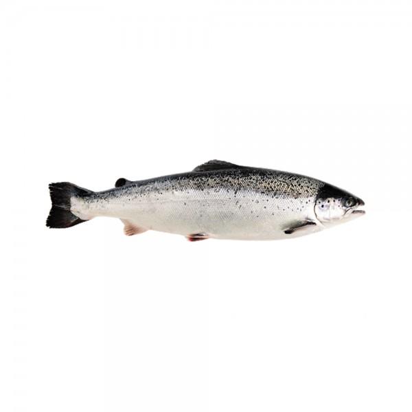 Fish Norwegian Salmon Whole 128678-V001 by Spinneys Fresh Fish Market