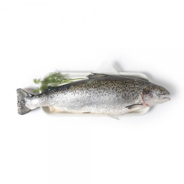 Scottish Whole Salmon per Kg 131767-V001 by Spinneys Fresh Fish Market