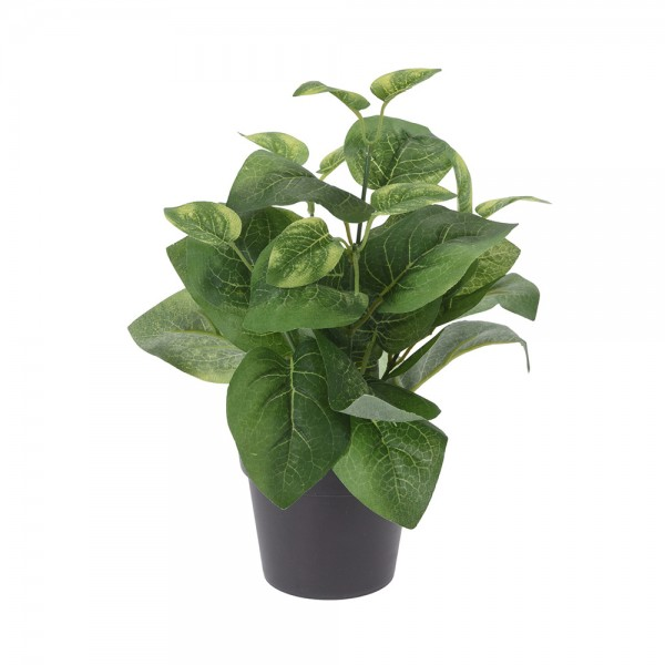 PLANT IN POT MIXED DESIGN 540735-V001 by EH Excellent Houseware