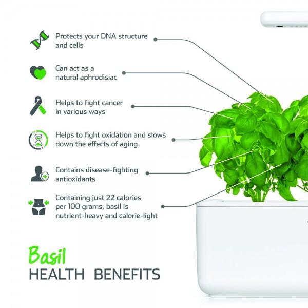 Basil Plant Pods