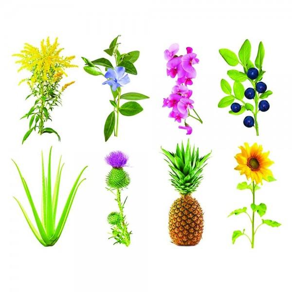 Experimental Plant Pods