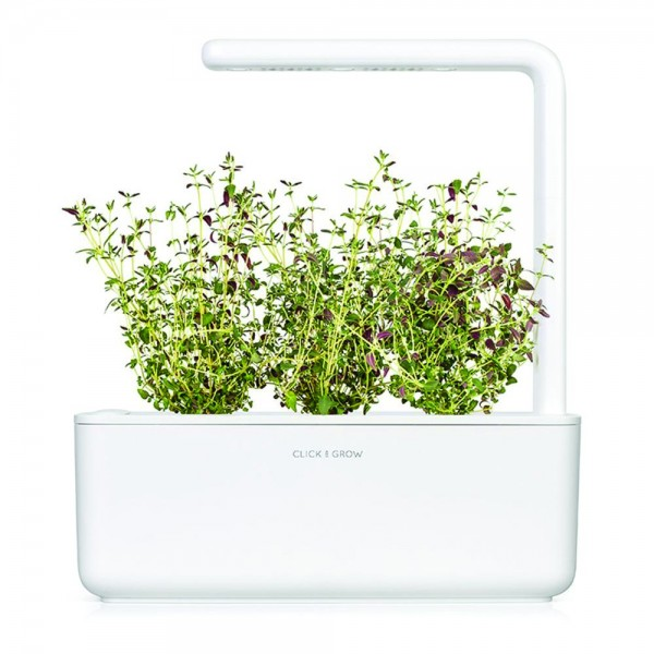Thyme Plant Pods