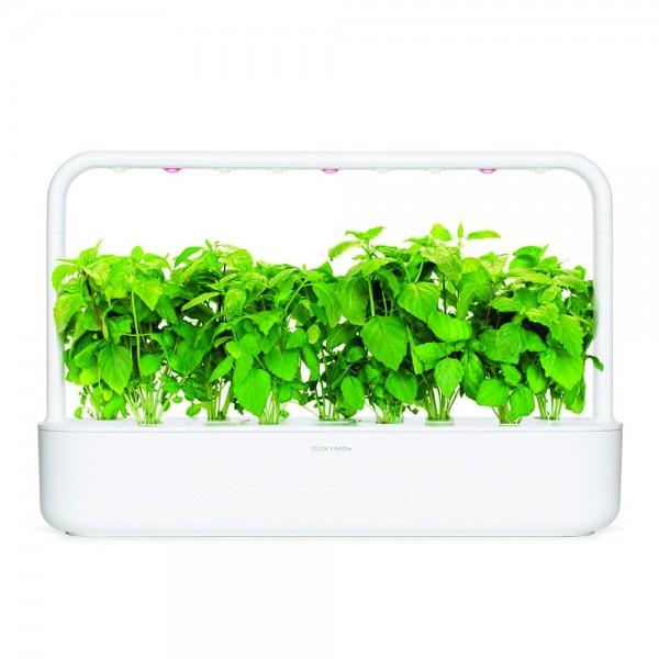 Cinnamon Basil Plant Pods