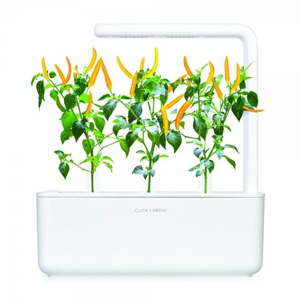 Yellow Chili Pepper Plant Pods